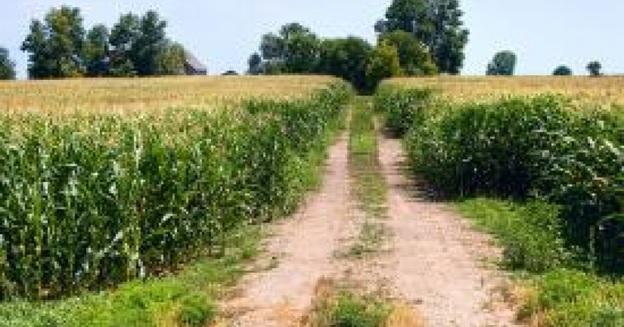 corn-industry
